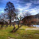 Gnarled Tree at Glenridding by Tom Gomez