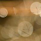 Light Orbs by Kasia Nowak