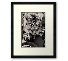 The King Cat Framed Print