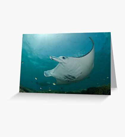 Manta Ray Show Greeting Card