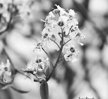 Tree Blossoms by Josie-Traylor