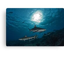 Sharks in the Sun Canvas Print
