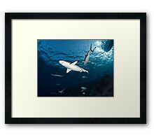 Sharky Time Framed Print