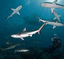 Sharkography by Valerija S.  Vlasov