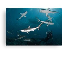 Sharkography Canvas Print