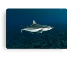 Master Grey Reef Shark Canvas Print