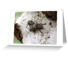 Soon-to-be Weevil Parents Greeting Card