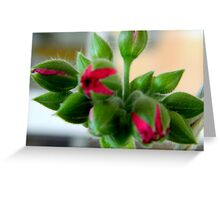 Just buds.....but beautiful! Greeting Card