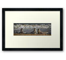 Three Atlantic Grey Seals Framed Print