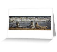 Three Atlantic Grey Seals Greeting Card