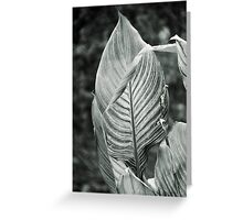Striped Leaf Greeting Card