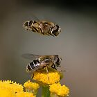 Hoverflies by hanspeters