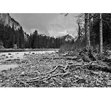 roots- Bow River Canada Photographic Print