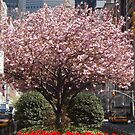 Colorful Tulips, Spring Colors, Murray Hill, New York City by lenspiro