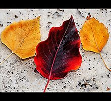 Fallen Leaves by atitsince82