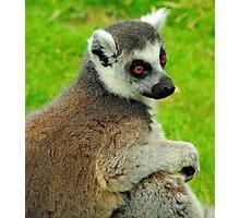Lemur One Photographic Print