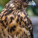 427 falcon by pcfyi
