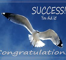 Congratulations Card with a Soaring Seagull by Corri Gryting Gutzman