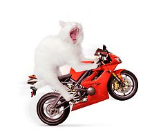 White cat riding motorcycle art photo print by ArtNudePhotos