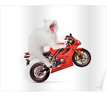 White cat riding motorcycle art photo print Poster