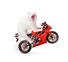White cat riding motorcycle art photo print Photographic Print