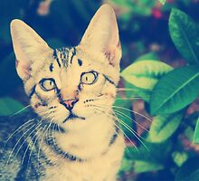 Coco the Cross Eyed Kitten  by katernater