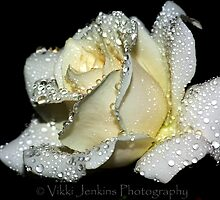 Rose Sprinkled with Waterdoplets by Vjenkins