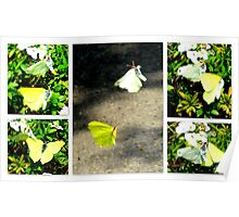 Large White Mating Dance Poster
