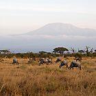 Kilimandscharo View by Valerija S.  Vlasov