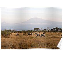 Kilimandscharo View Poster
