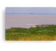 Lake Manyara Landscape Canvas Print