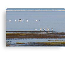 Stork Panorama Canvas Print