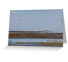 Stork Panorama Greeting Card