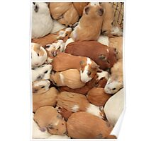 Guinea Pigs at the Market Poster