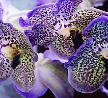 Aliens. Orchids from Keukenhof. Netherlands by JennyRainbow