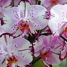 Exotic Dreams. Orchids from Keukenhof. Netherlands by JennyRainbow