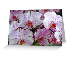 Exotic Dreams. Orchids from Keukenhof. Netherlands Greeting Card
