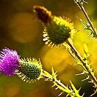 Thistle Emergent by Roger Passman