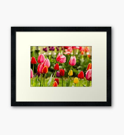 Bold, Bright and Beautiful! Framed Print
