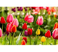 Bold, Bright and Beautiful! Photographic Print