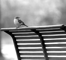 Bench Bird by Hayley R. Howard