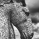 Kelpie Portrait by M.S. Photography/Art