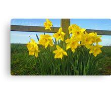 Daffodils cross Canvas Print