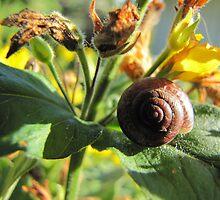 Sleeping snail on leaf by PVagberg