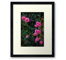 Climbing roses in a historic setting Framed Print
