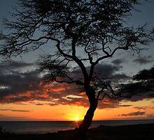 Hawaiian Sunset by Lucy Adams