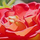 April Rose by Chet  King