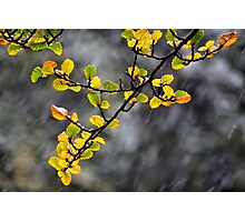 The Fagus Photographic Print