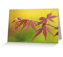 maple leaves in spring Greeting Card