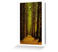 Avenue of Norway Spruce - Breenhold, Mt Wilson Greeting Card